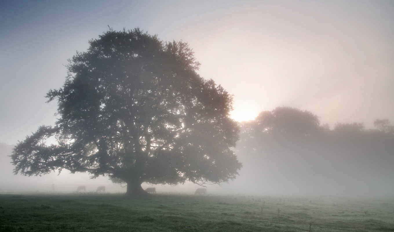 утро, mist, фоны, пейзажами, категории, осень, дерево, туман, берег,