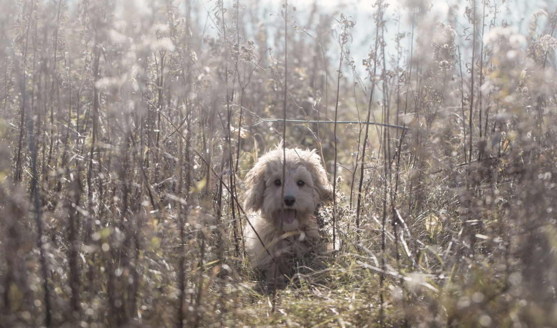 kartinka, views, photos, изображение, priroda, zhivotnye, sbornik, трава, собаки, собака,