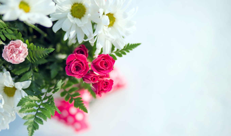Обои На Рабочий Стол Цветы Красивые Ромашки