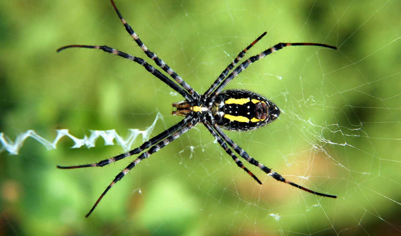 паук, web, пауки, паутину, пауков, паутине,