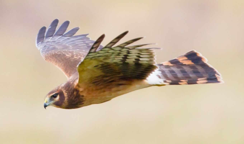 flashcard, птица