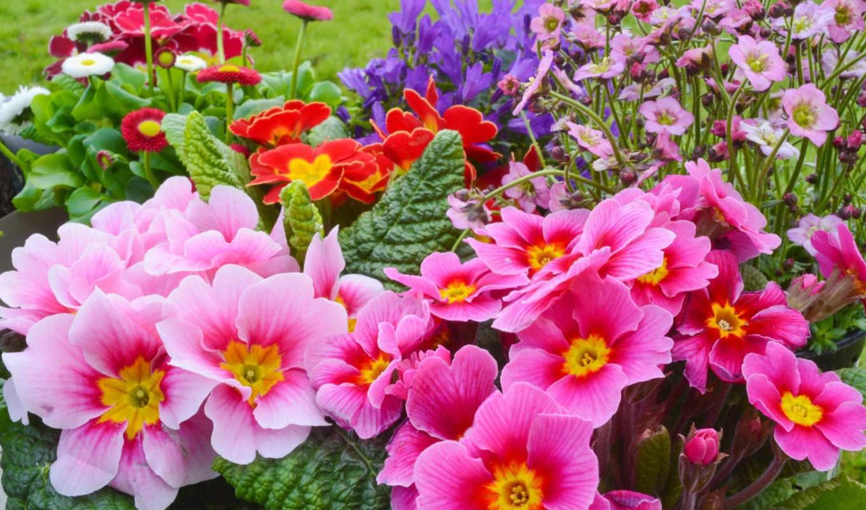 flowers, цветы, весна, коллекция, many,