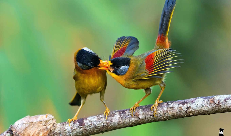 птицы, zhivotnye, branch, еда, птица,
