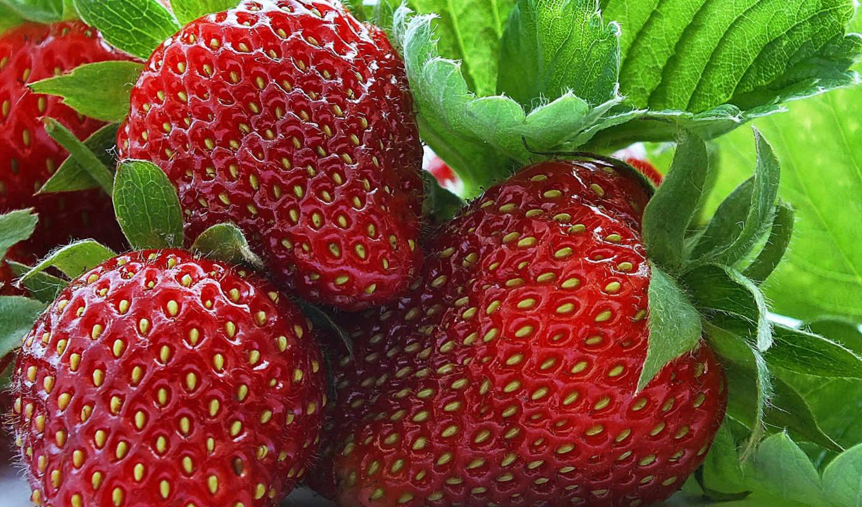 макро, ягоды, клубника, фрукты, еда, разделе,