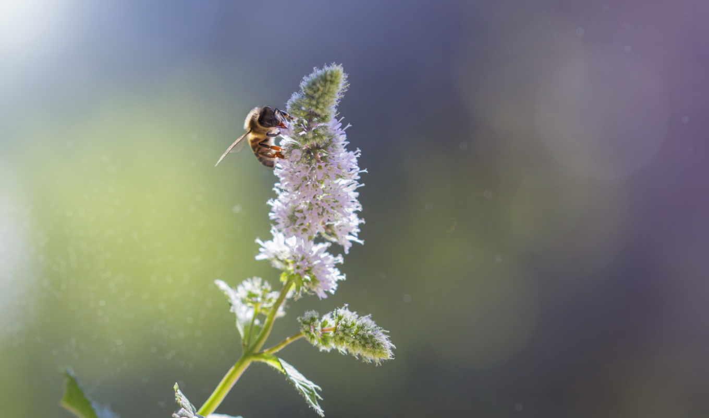 лед, иней, листья, winter, фото, совершенно, красивые, daily, фон, Сакура, branch, макро, осень, листва, розовый, цветы, пчелка,
