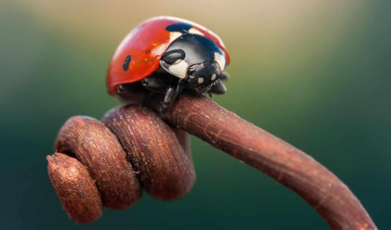 макро, очарование, живые, насекомое,