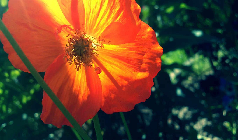 оранжевый, зелёный, red, базе, высоком, качестве, summer, марта, mac, нов,