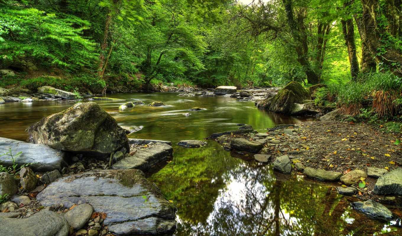 природа, лес, landscape,