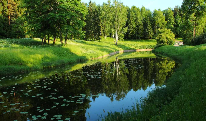природа, trees, река, лес, пруд, park, германия,