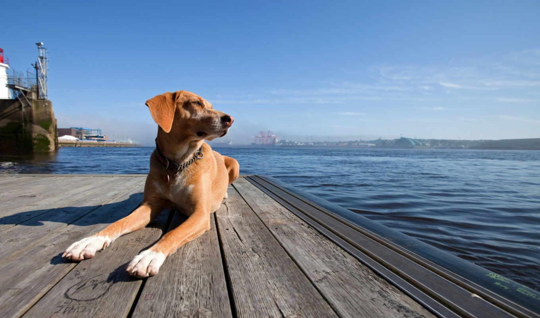 собака, море, закат, друг, картинка,