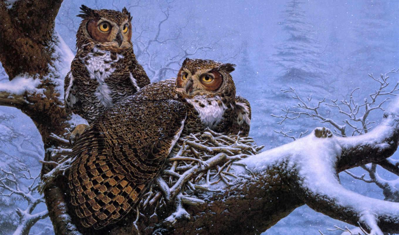 kromschroeder, nest, lee, февраль, совы, зимой, great, horned, сова,