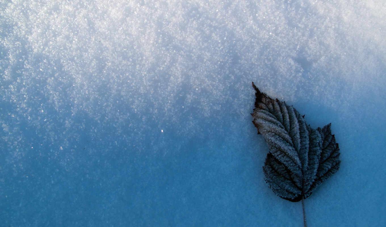 left, snow, frostbitten, white, ice,