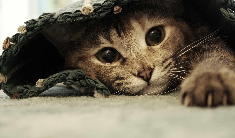 серый, кот, под, кошки, коты, котята, котенок,