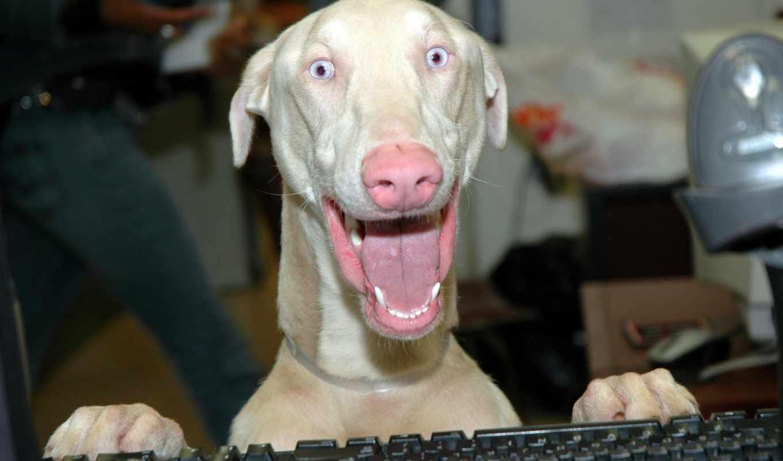 собака, собаки, собак, meme, нос, улыбака, hulk, создать, фотообои, albino,
