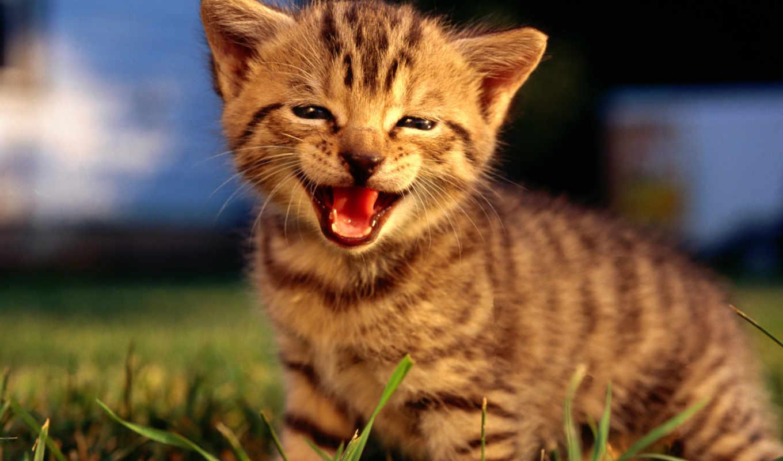 обои, кошки, фото, котята, коты, котенок, животные
