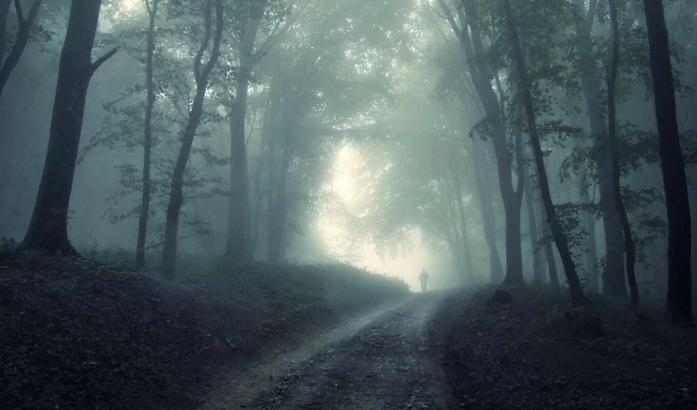 лес, human, дерево
