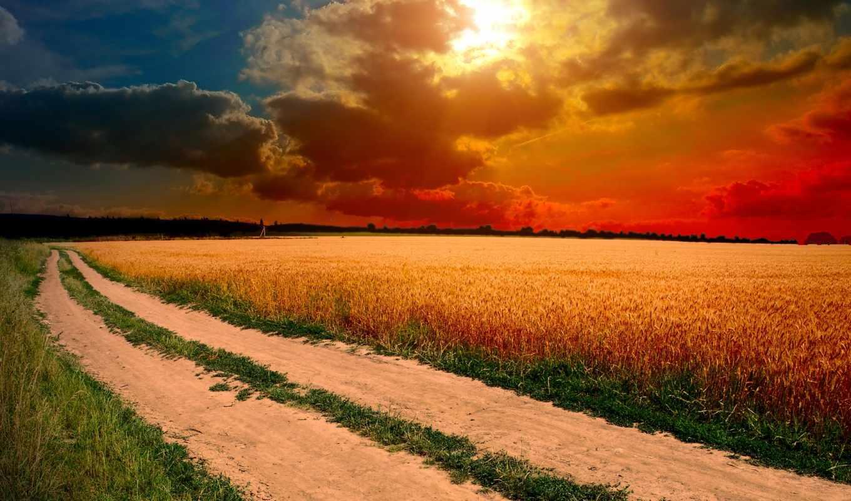 поле, закат, солнце, облака, небо, колосья, трава, ipad, дорога, природа,