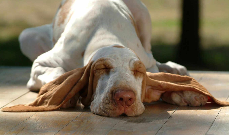 собаки, забавные, собак, июня, фотографии, смешные,