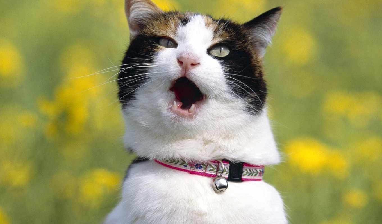 кот, screaming, кота, стебли, совершенно,