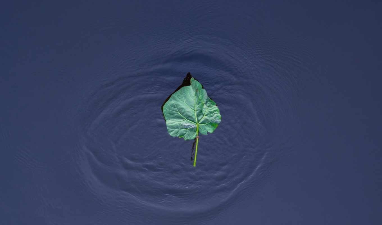 rasmlar, фоны, flickr, photos, тризуб, природа, страница,
