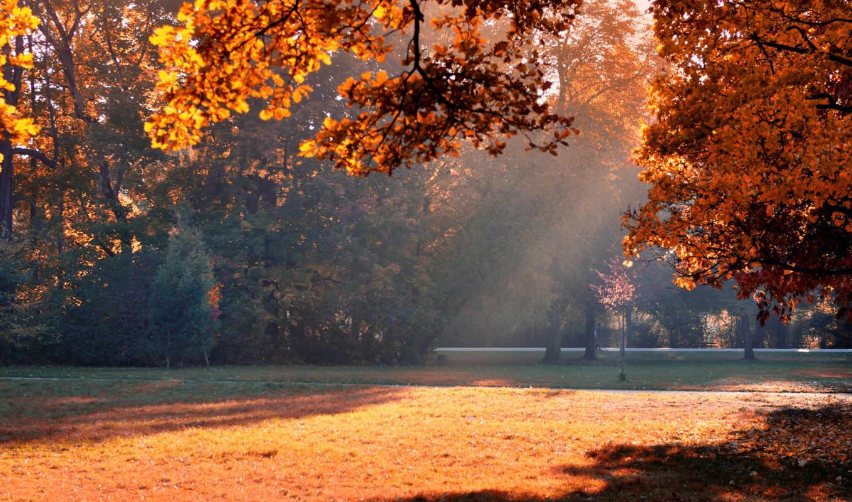 осень, машины, утро, свет, доброе, фак, листва, парк, деревья,