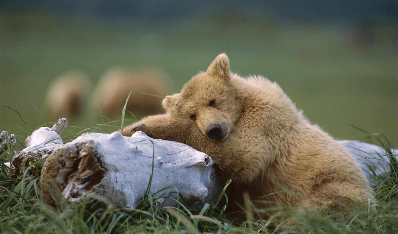 животные, животных, рамочка, удачный, дикие, фотографии, нов, однако,