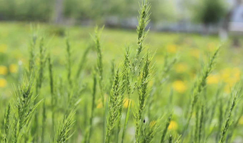 макро, трава, природа, компьютер, smartphone, планшетный,