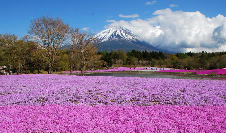 коллекция, фудзияма, япония, fone, растущие, разных, июня, горы, разрешениях,