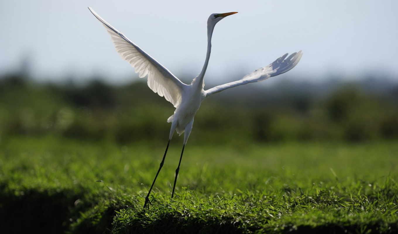 природа, деревня, volox, lagoon, чтобы, когда, rising,