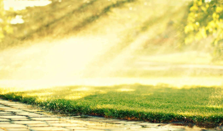 трава, газон, капли, rosa, дорога, солнце,