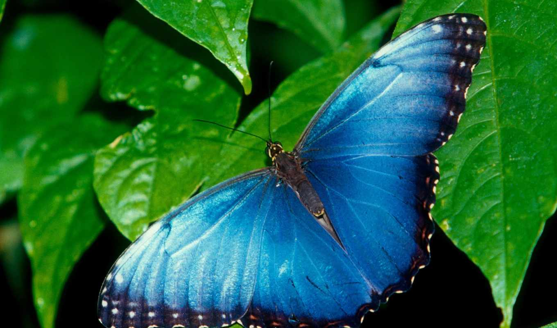 бабочки, яркие, мар, информация, lena, anders, цитата, оригинал, цветах, свой,