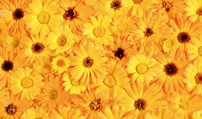 добавил, share, cvety, many, цветов, пазлы, humbert, arnoldo,