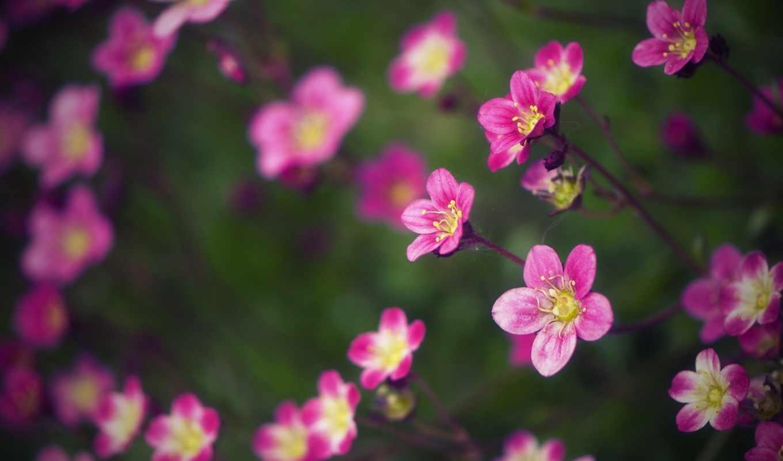 дек, природа, количество, цветы,