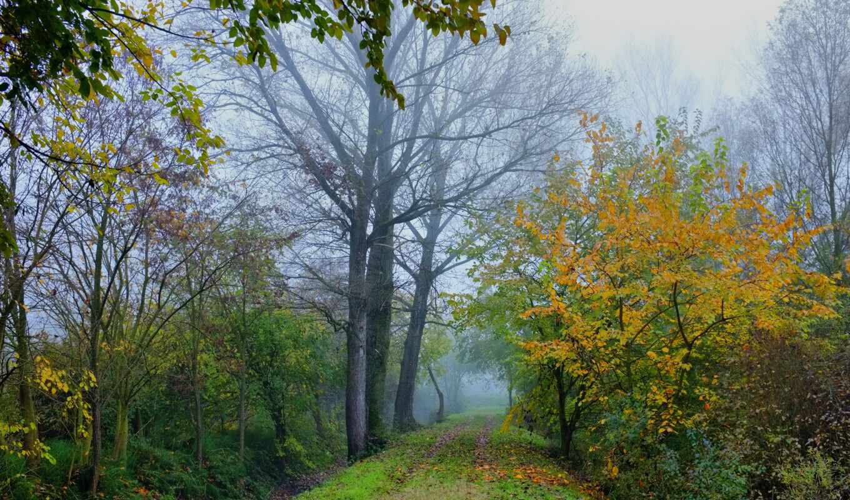 туман, пейзажи -, загрузок, красивые, priroda, сайте,