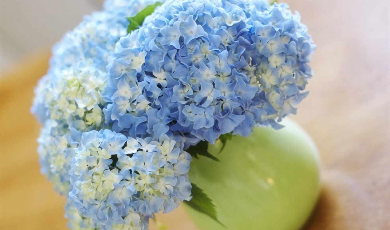 букет, цветы, взгляд, гортензии, вазе, гортензия, стеклянной, круглой,