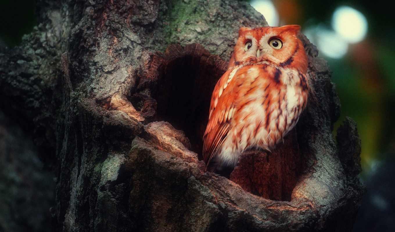 сова, птица, дерево, животные, ложбинка, лес,