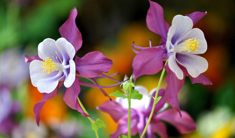 flowers, розовый,
