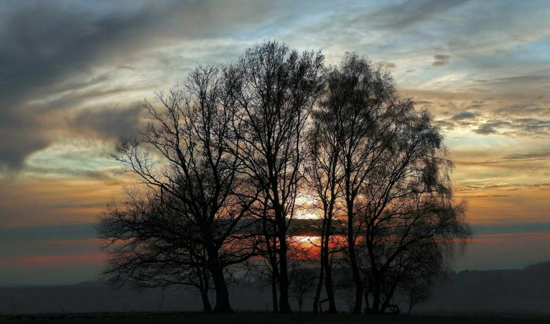 природа, вечер, trees, небо, закат, сумерки, англия, силуэты,