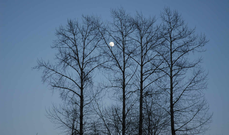 природа, небо, луна, светает, wallpapers, деревья, синее, ветви, вечер, код, добавил, голубое, меня, fi, iubit, скачали, за,