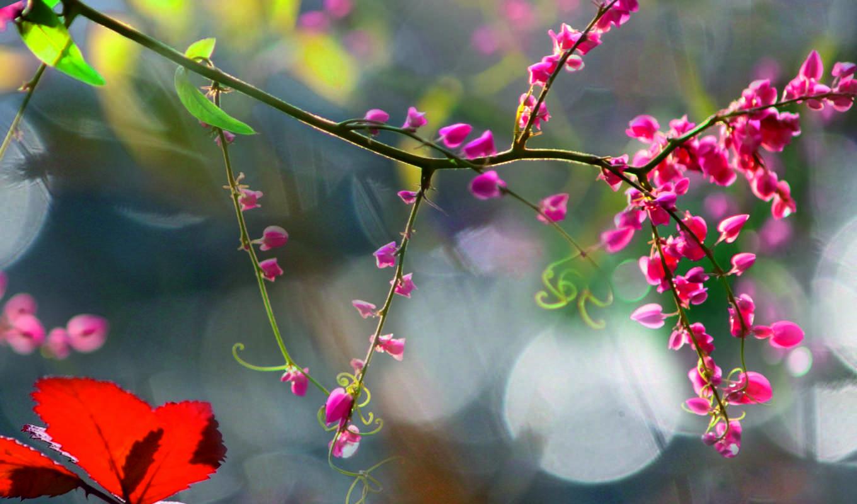 утро, туман, цветы, осень, макро,