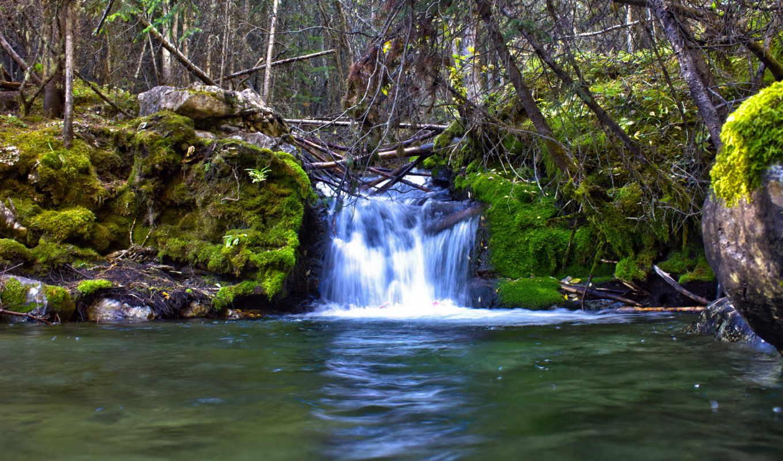 мох, ручей, природа, скалы, ветки, водопады, водопад, леса, реки, деревья,