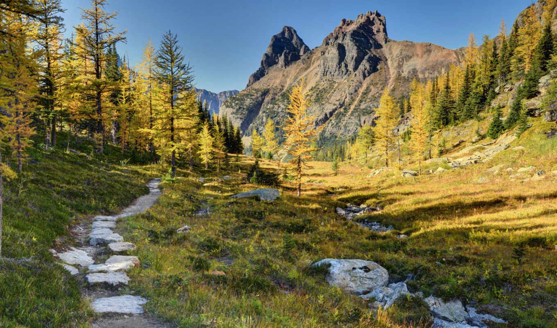 park, national, канада, yoho, горы, деревя, лес,