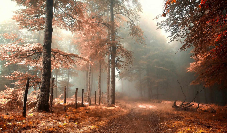 осень, лес, туман, дорога, забор, природа, картинка,