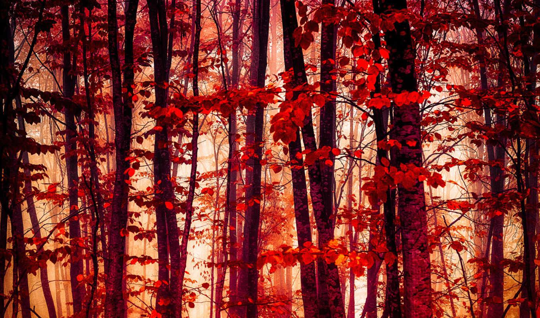 ecran, fonds, automne, arbres, forêt, les, природа, fond, avec,