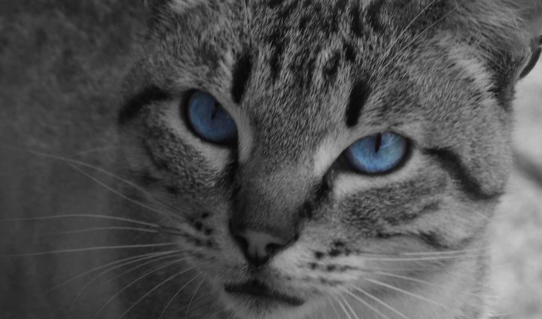 black, white, animal, зелёный, кот, глаз, blue