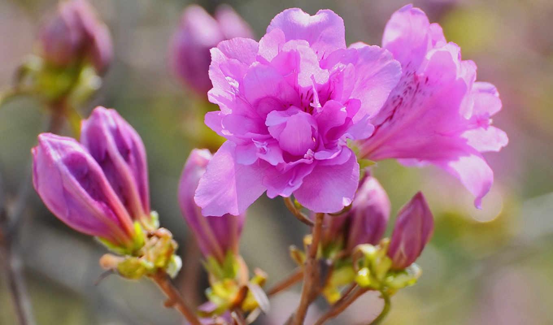 цветы, яркие, фотографии, цветами, сборнике,
