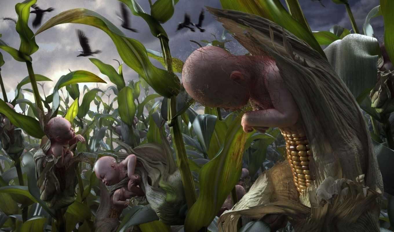 children, кукурузы, corn,
