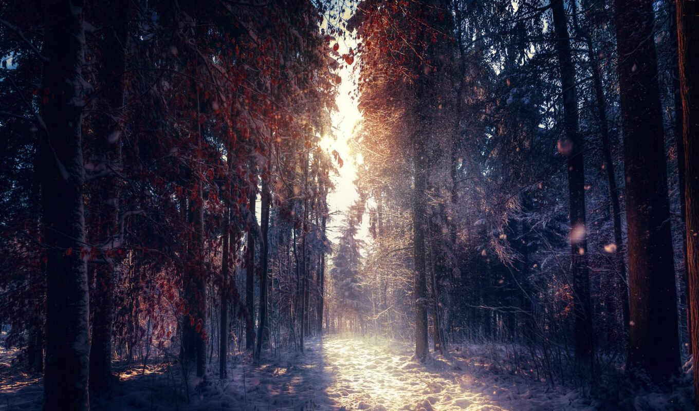 лес, палуба, osveschit, sun, winter, растительный, french, prairie, фотограф, спать, kovyl