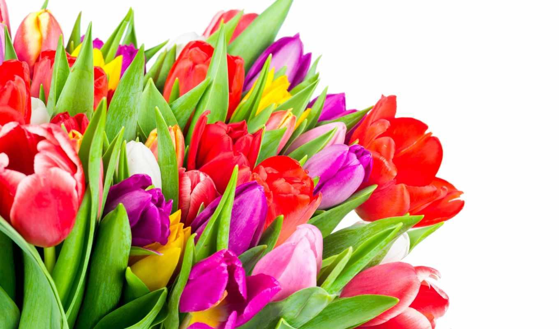 много, цветы, desktop, тюльпаны, размере, еда, page, чтобы, посмотреть, обою, истинном,