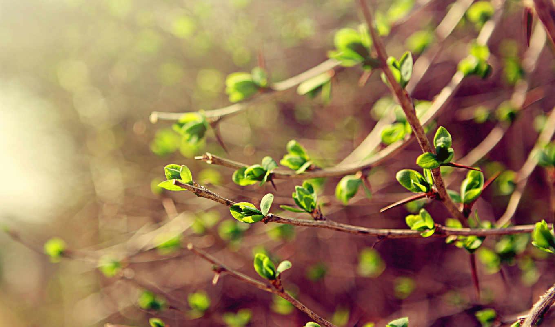 весна, ветки, макро, зелёный, листья,